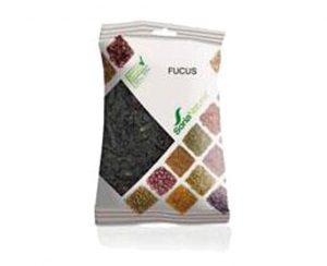 Fucus plantas en bolsa Soria Natural