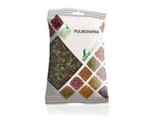 Pulmonaria plantas en bolsa Soria Natural