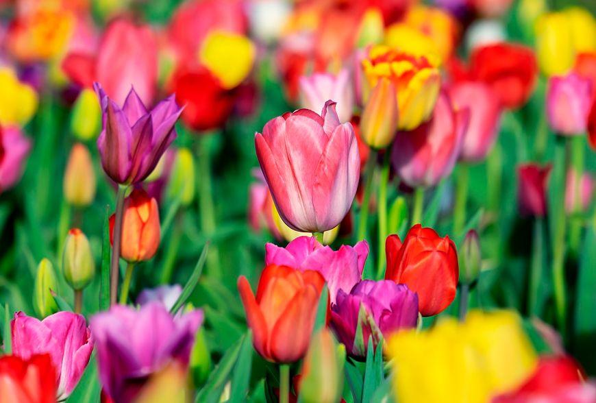 Las alergias primaverales como combatirlas